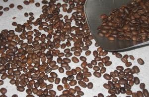 Mottled Celebes beans