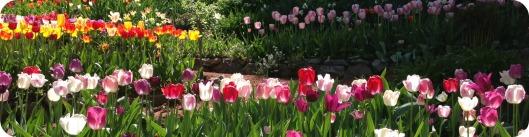 Tulip Header