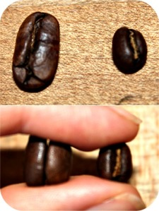 The peaberry bean is on the right in both pictures.